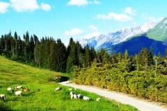 Sarbatoarea-Gustului-Gusturi-si-Destinatii-Franta-Savoie-Manigou-Marc-Veyrat-18