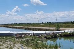 Des bassins d'esturgeons et des oies